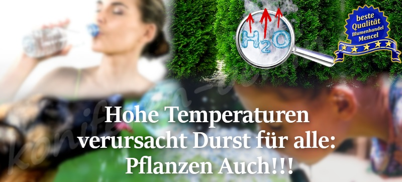 Hohe Temperaturen