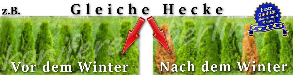 Tipps f r die winterpflege for Pflanzen laden berlin